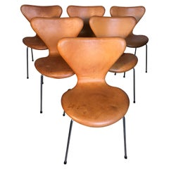 Six Arne Jacobsen Butterfly Dining Chairs Leather