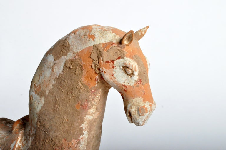 Six Dynasties Period Figure of a Horse For Sale 7