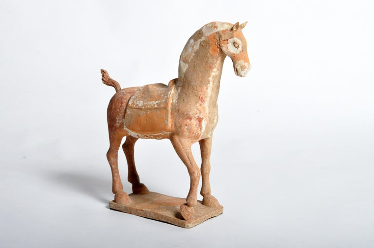 A majestic and nobly-proportioned Six Dynasties (220 AD – 589 AD) pottery model of a prancing horse. Similar to early tang horses, this figure is strong and simple. The animal is caught mid-motion, one leg bent, head held high and directed forward,