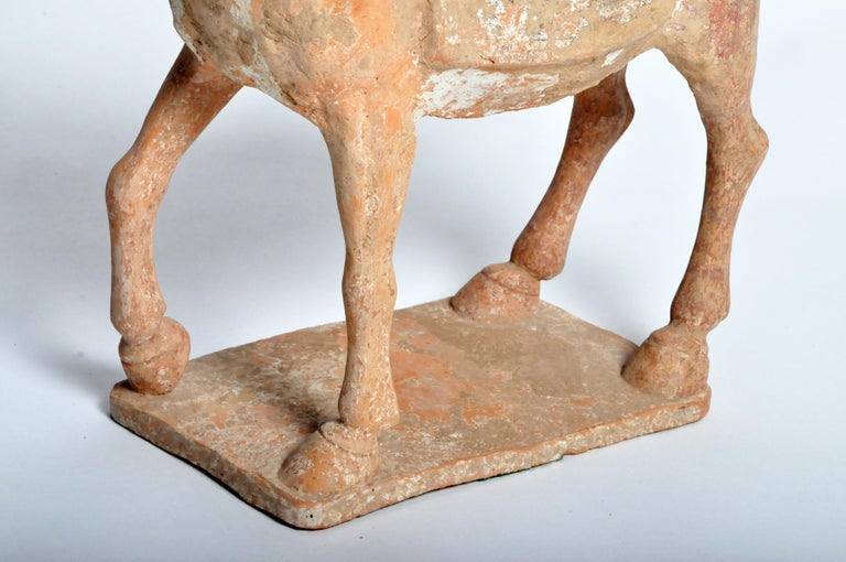 Six Dynasties Period Figure of a Horse For Sale 13
