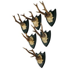 Six Large Antique Deer Trophies on Wooden Carved Plaques, circa 1860