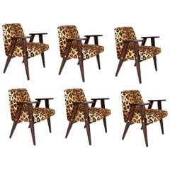 Six Midcentury 366 Armchairs in Leopard Print Velvet, Jozef Chierowski, 1960s