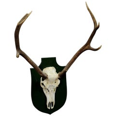 Small Black Forest Deer Trophy from a Noble Black Forest Estate