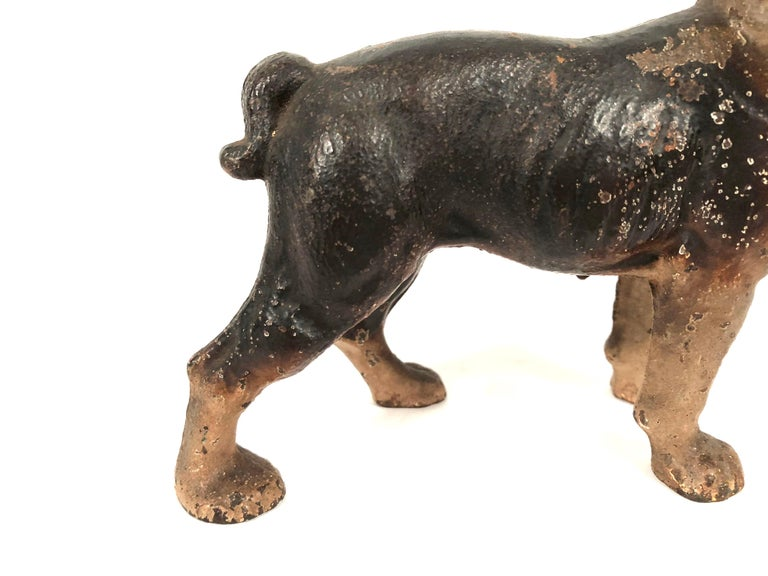 American Small Boston Terrier Painted Cast Iron Coin Bank For Sale
