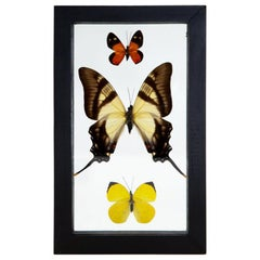 Small Orange Butterfly, Small Yellow, and Large Cream and Brown Butterfly