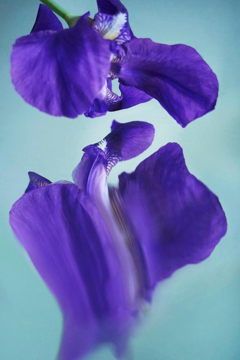 Sophie Delaporte Color Photograph - Flowers#07, flowers, purple, water