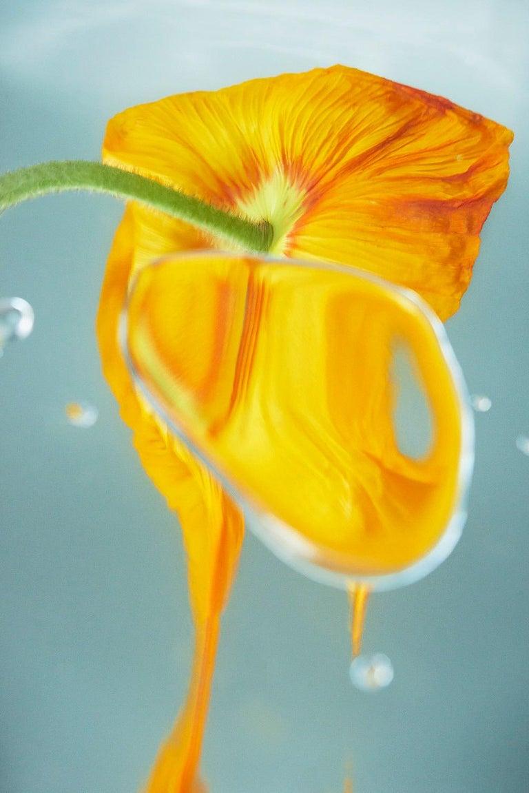 Sophie Delaporte Figurative Photograph - Flowers#18, orange, flower, beauty, freshness