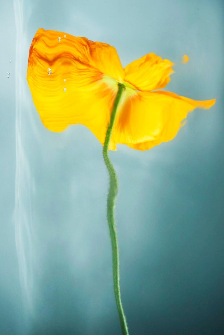 Sophie Delaporte Color Photograph - Flowers#19, flower, yellow, freshness, water