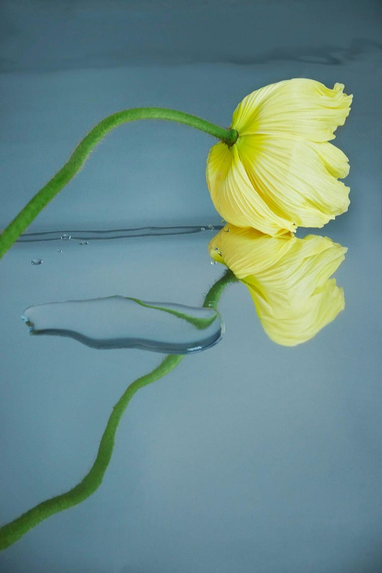 Sophie Delaporte Color Photograph - Flowers#4, yellow, freshness, water,