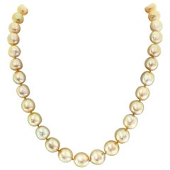 South Sea Golden Cultured Pearl Necklace