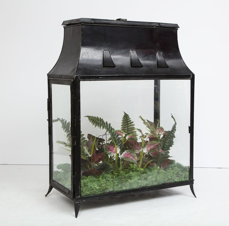 Spacious Glass Terrarium For Sale 5