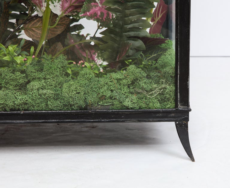 Spacious Glass Terrarium For Sale 1