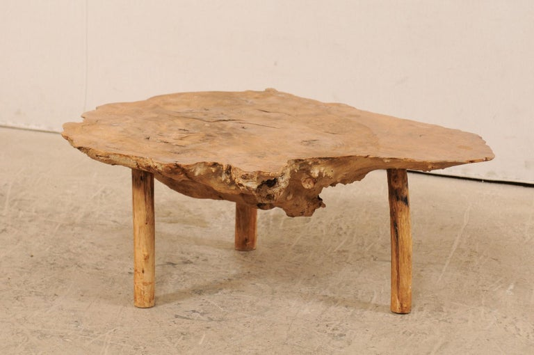 A Spanish coffee table of burl wood from the turn of the 19th-20th century. This antique table from Spain features a large single section of burl wood, with smooth top showing the beautifully formed rings, and natural live-edge along sides. The