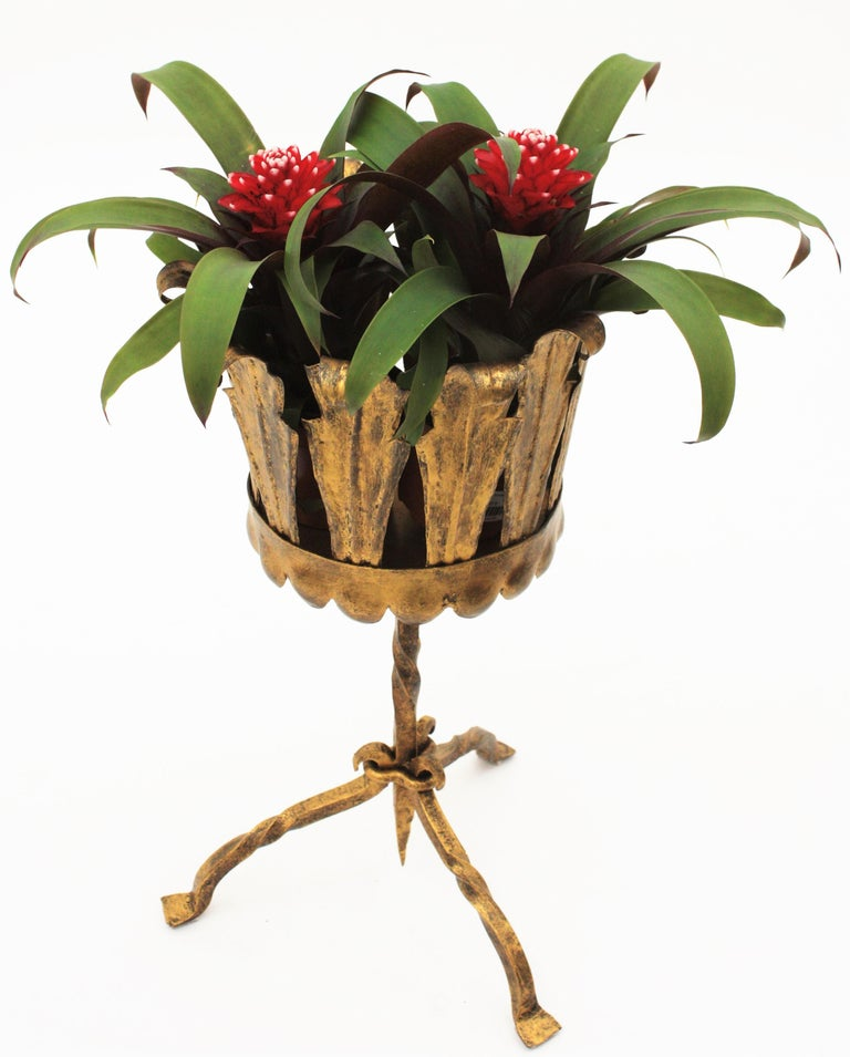 Mid-20th Century Spanish Mid-Century Modern Wrought Gilt Iron Leafed Planter in Gothic Style For Sale