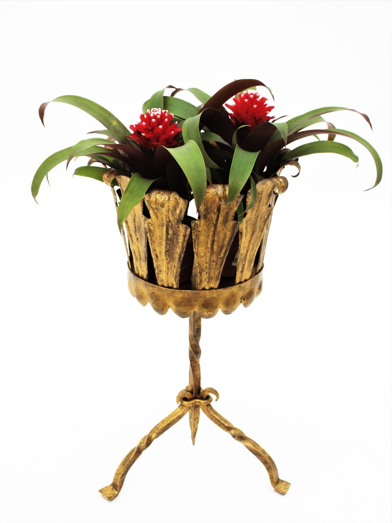 Spanish Mid-Century Modern Wrought Gilt Iron Leafed Planter in Gothic Style For Sale 2
