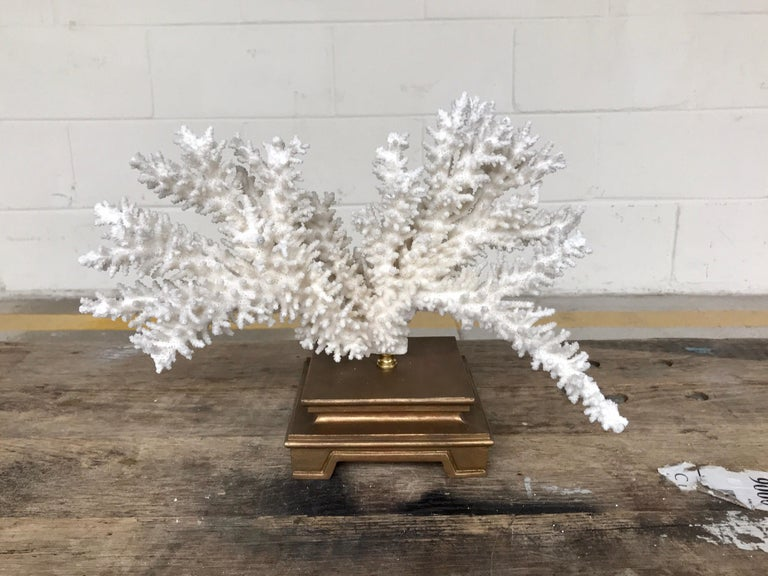 Specimen Blanc Long Branch Coral, Mounted For Sale 4