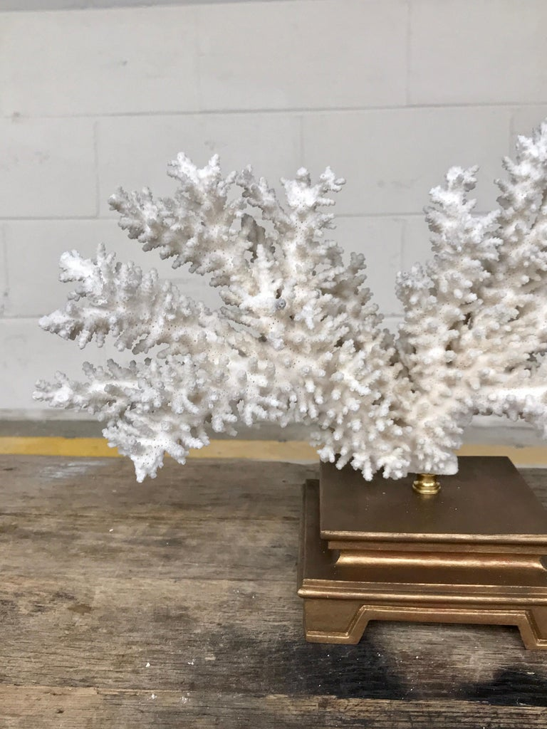 Specimen Blanc Long Branch Coral, Mounted For Sale 6