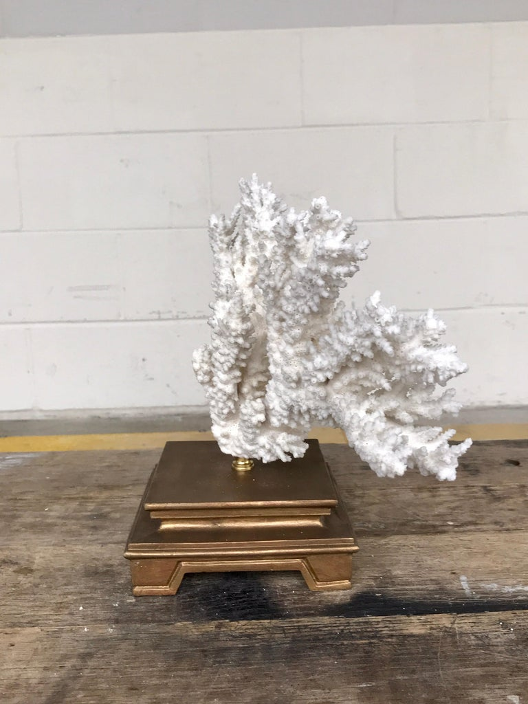 Specimen Blanc Long Branch Coral, Mounted For Sale 7