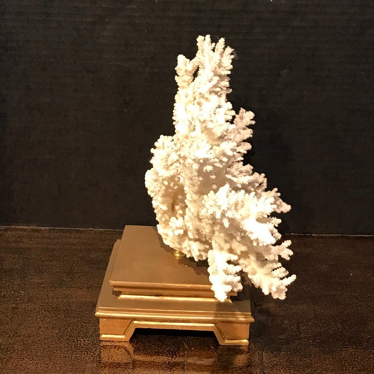 20th Century Specimen Blanc Long Branch Coral, Mounted For Sale