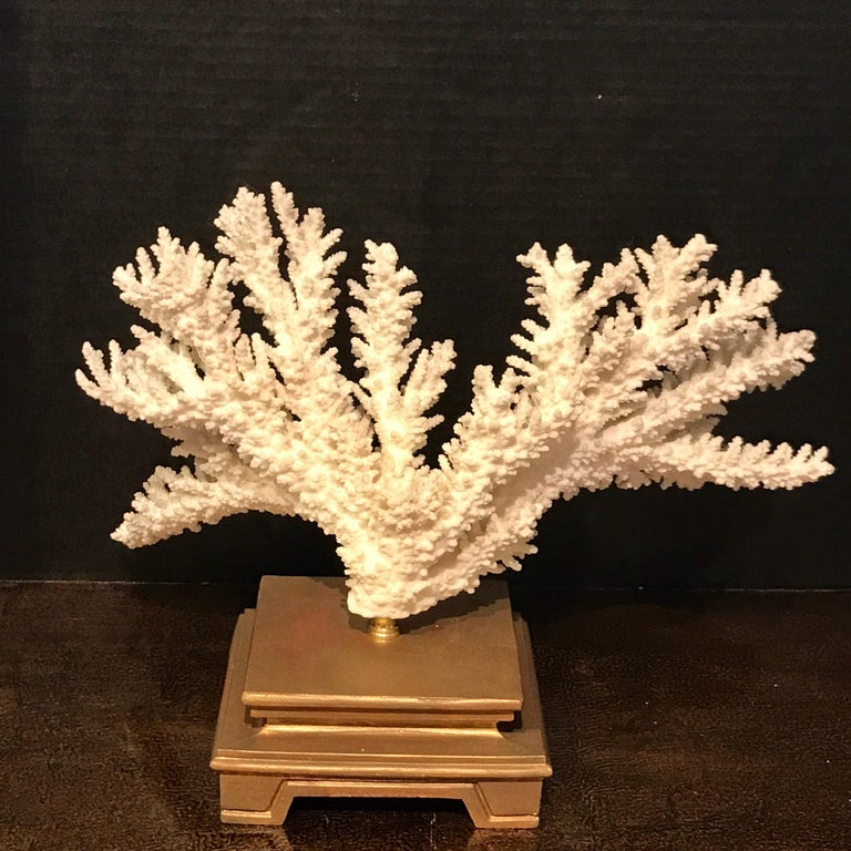 Brass Specimen Blanc Long Branch Coral, Mounted For Sale