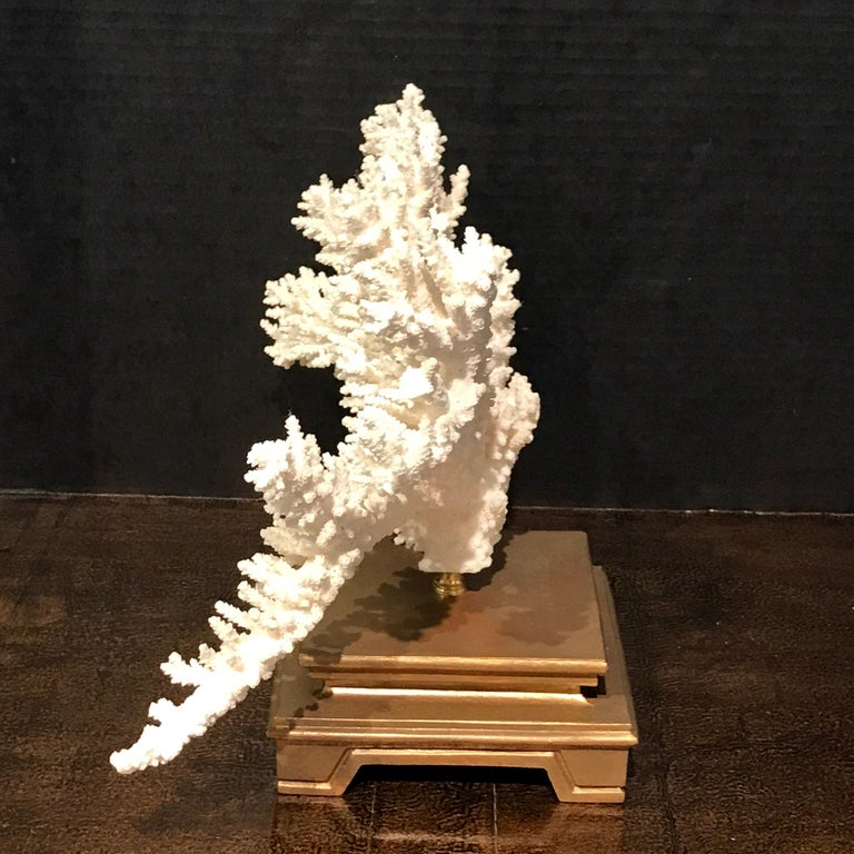 Specimen Blanc Long Branch Coral, Mounted For Sale 1