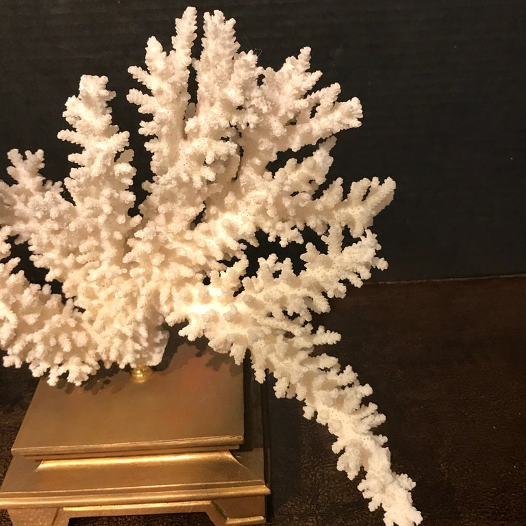 Specimen Blanc Long Branch Coral, Mounted For Sale 2