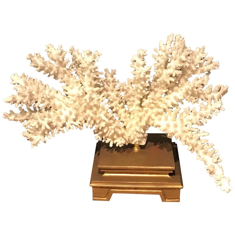 Specimen Blanc Long Branch Coral, Mounted For Sale
