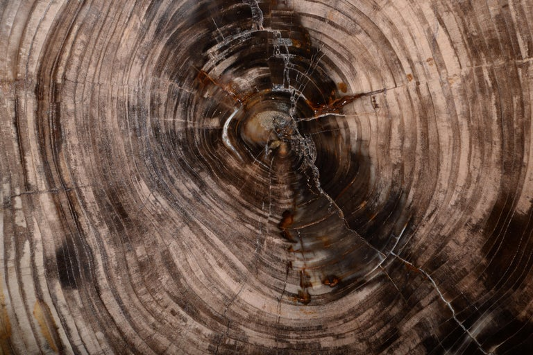 Spectacular Petrified Incense Cedar Wood Fossil In Excellent Condition For Sale In London, GB