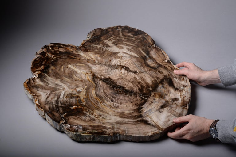 18th Century and Earlier Spectacular Petrified Incense Cedar Wood Fossil For Sale