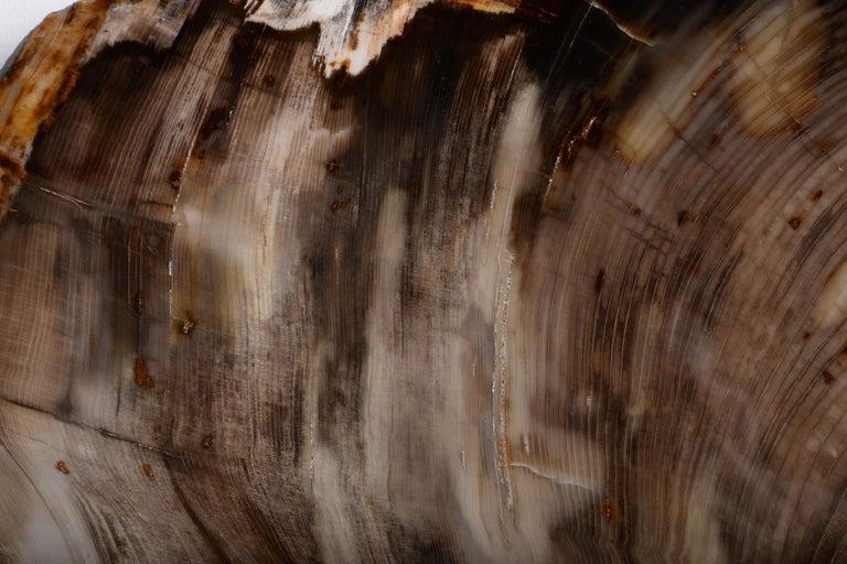 Spectacular Petrified Incense Cedar Wood Fossil For Sale 4