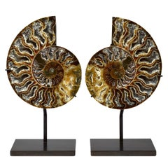Split Ammonite Fossil, Custom Mounted, Jurassic, Cretaceous Period