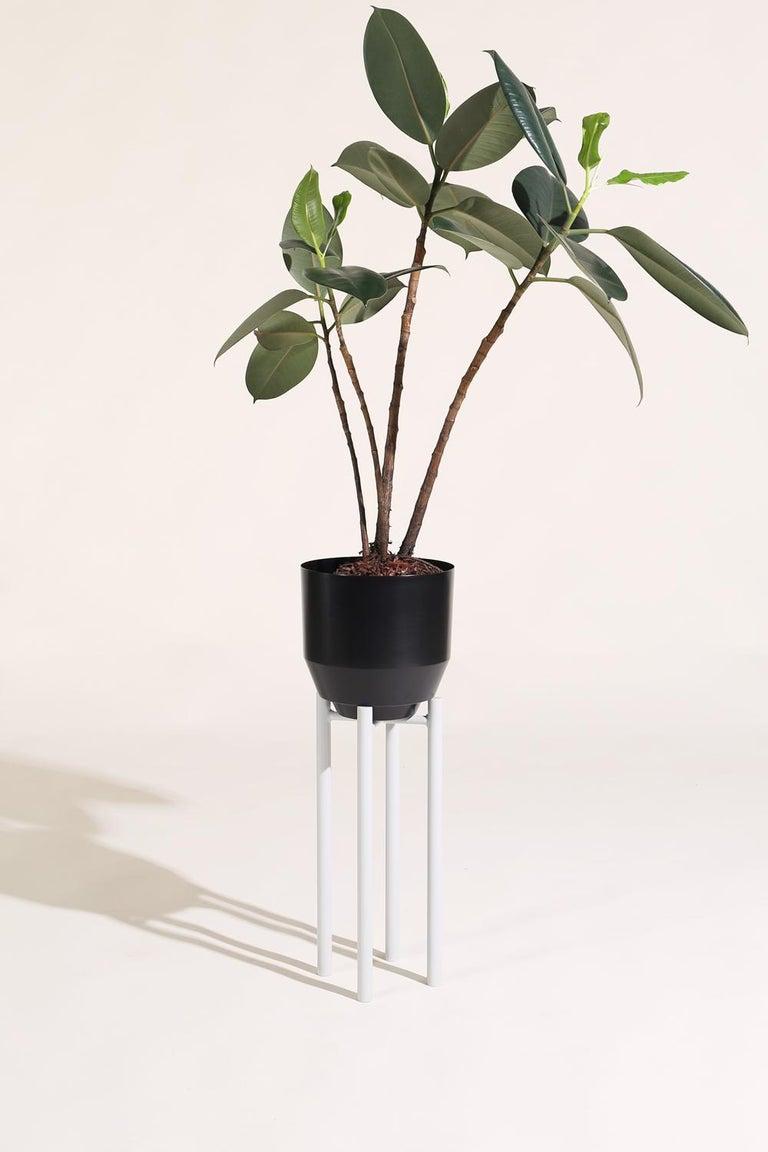 American Spun Planter, Black For Sale