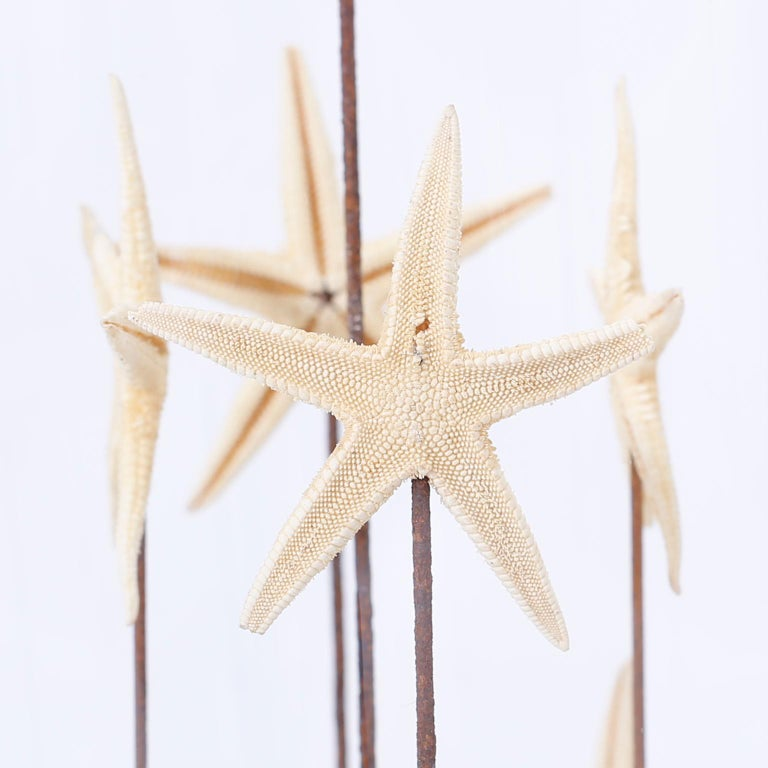 Organic Modern Starfish in a Vintage Glass Specimen Dome For Sale