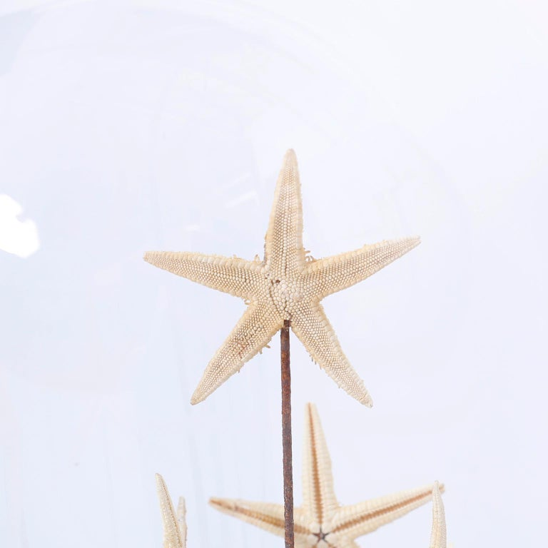 American Starfish in a Vintage Glass Specimen Dome For Sale