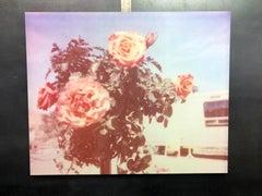 A sunny morning - Contemporary, Landscape, expired, Polaroid, analog