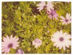 Artificial Flowers - Suburbia, analog