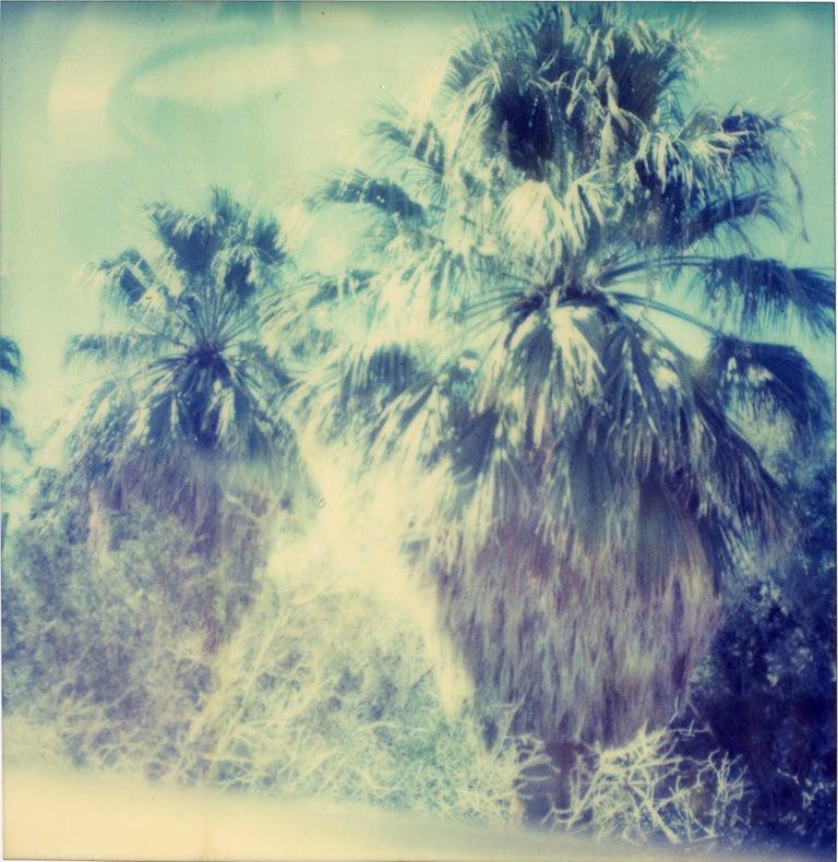 Stefanie Schneider Color Photograph - Blue Sky Palm Trees, Contemporary, 21st Century, Polaroid, Landscape Photography