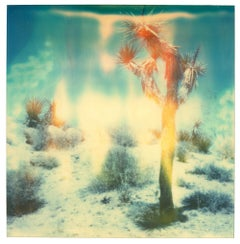 Buried - Contemporary, Landscape, Figurative, expired, Polaroid, analog