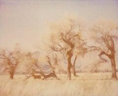 Dreaming of Buffalo - Contemporary, Landscape, USA, Polaroid, photograph