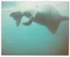 Dugong I - Stay