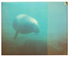 Dugong - Stay, Contemporary, Abstract, Landscape, USA, Polaroid, Photograph