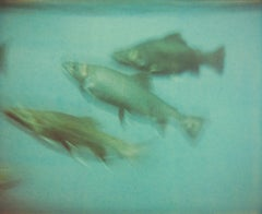 Fish (Stay) - Contemporary, Expired, Polaroid, Photograph