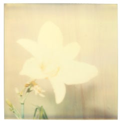 Flower (29 Palms, CA) - Polaroid, 21st Century, Contemporary, Color