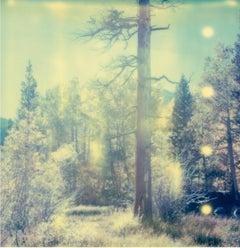 In the Range of Light - Stranger than Paradise