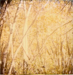 Indian Summer II  - The Last Picture Show, analog, 128x126cm, mounted
