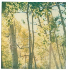 Indian Summer III  (The Last Picture Show)