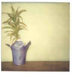 Lonely Plant (29 Palms, CA) - Polaroid, Contemporary, 21st Century