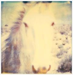 Mind Screen - (50x50cm) - Contemporary, Abstract, Horse, Polaroid, 21st Century,