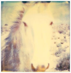 Mind Screen - (50x50cm) - Contemporary, Abstract, Horse, Polaroid, 21st Century,