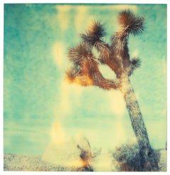 Mind Screen - Contemporary, Abstract, Landscape, USA, Polaroid, Desert